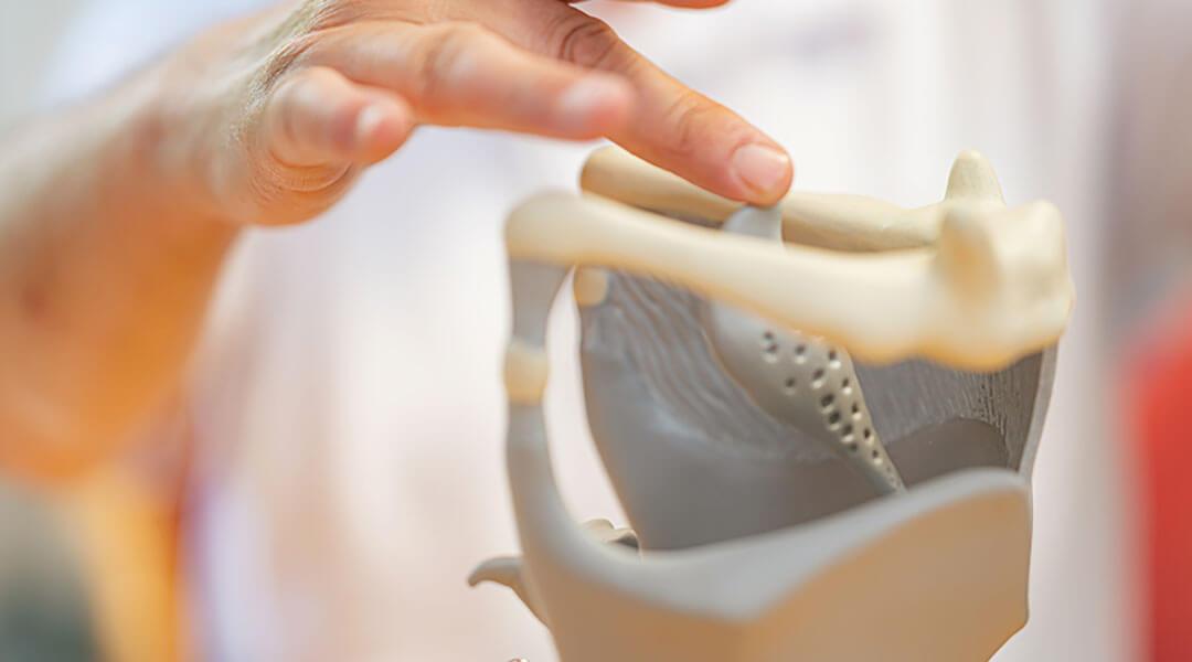 Sprachtherapie Nahaufnahme Stimmbänder am Modell